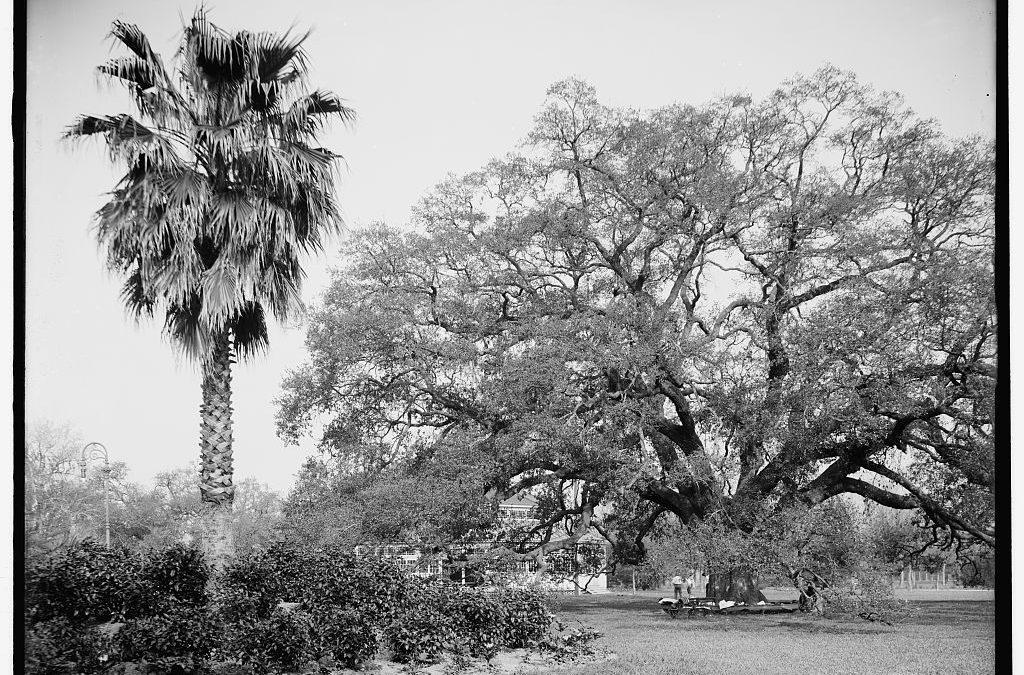 City Park Trees 1910