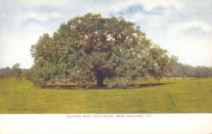 suicide oak